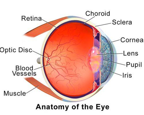 http://icare.lk/wp-content/uploads/2017/09/eye_anthomy-500x400.jpg